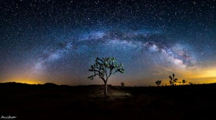 milky-way-galaxy-over-joshua-tree-manish-mamtani
