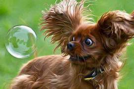 astonished doggy - balloon