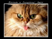 attitude funny kitty sticks tongou out