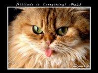 attitude funny kitty sticks tongou out