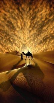 Camel and Man and Desert