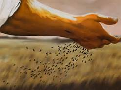 Sowing seeds 5