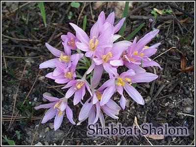 violets-and-sabbath