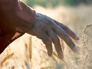 hand-on-wheat-field
