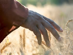 hand-on-wheat-field