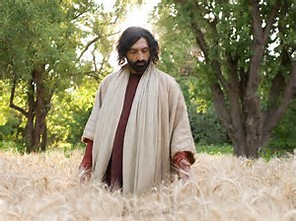 yhshua-in-wheat-field-holding-the-tares