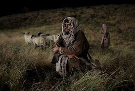 Shepherd green grass not in decemebr